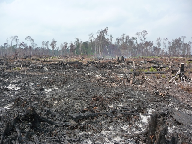 Burned Peat Soil
