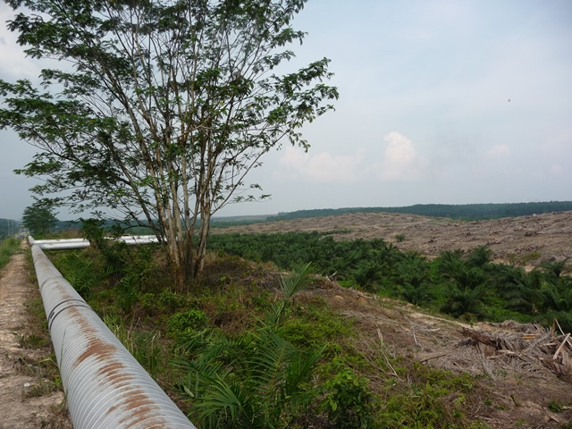 Oil Palm Replanting, Riau