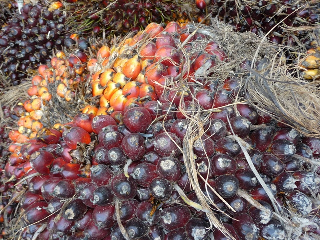 Oil Palm Fruit Bunch